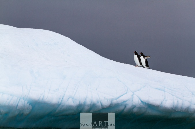 No 7 of 9: Penguins on Ice