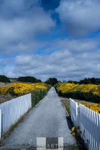 The flower lined lane to Government House