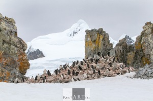 A colony on the rocky in majestic surroundings