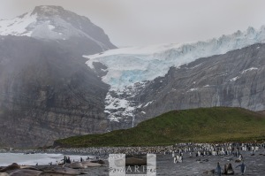 Glacier and Cliff above the King Penguin Colony