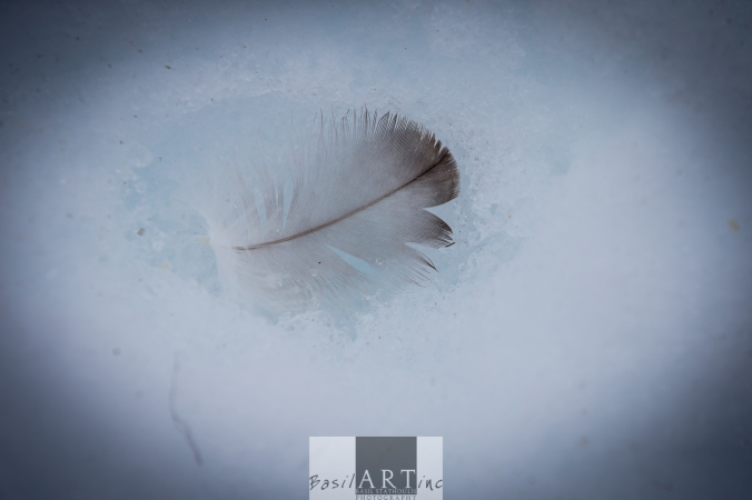 Feather in a snow bed