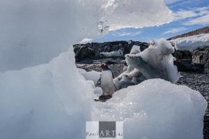 Inquisitive land birds: the Gentoo penguin