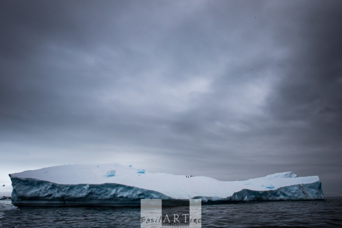 Floating penguin troop on a n iceberg